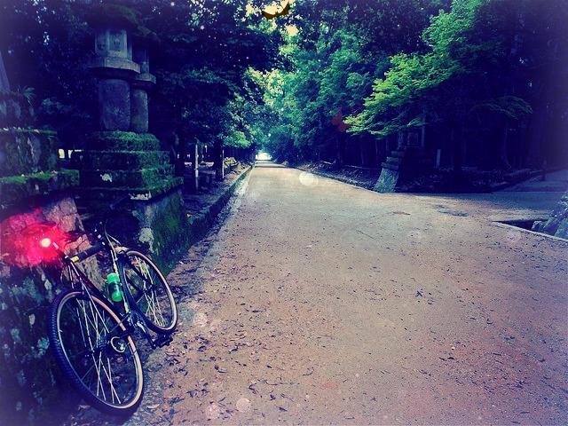 ywilight bike