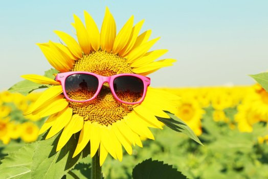 sunflower-with-sunglasses