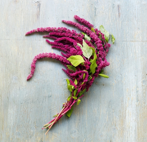 amaranth-fall-flowers-love-lies-bleeding-1012-e1525991038366.jpg